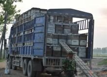 100%天然蜂蜜,爸妈养蜂400箱,绝无添加,买3斤送1斤